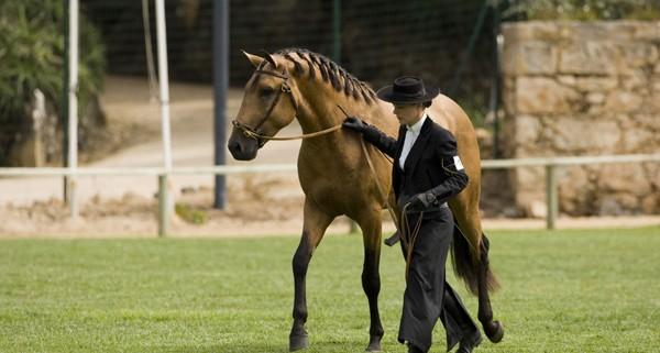 calul-lusitan1
